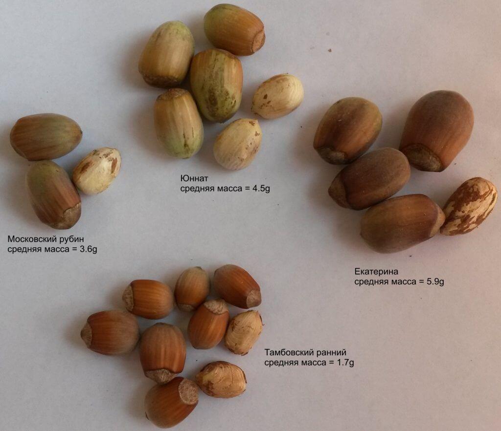 Урожай орешков 2016 года