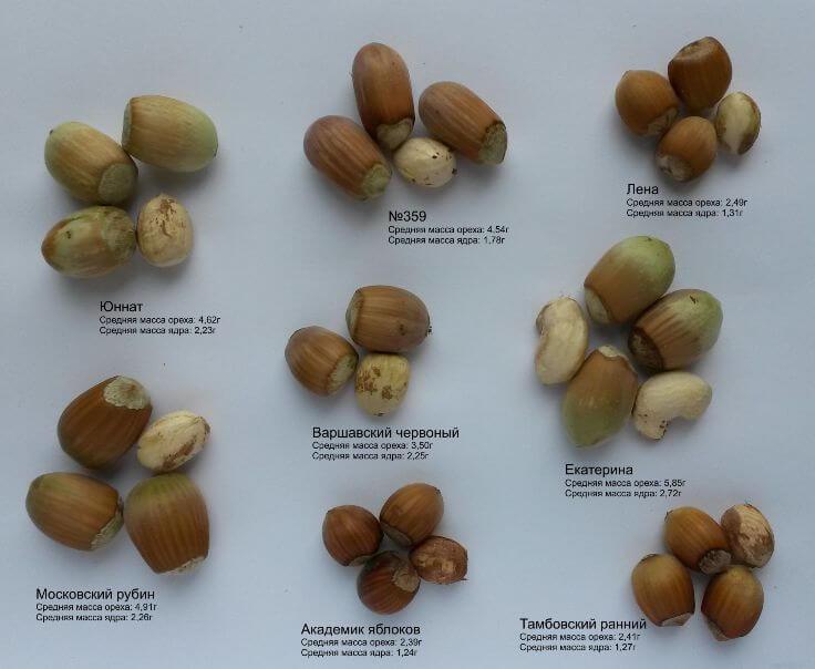 Урожай орешков 2017 года