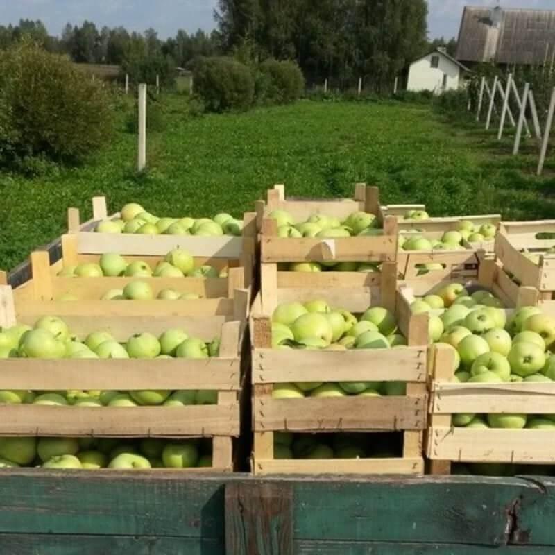 Фермерские продукты питания